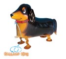 Dachshund Walking Pet Balloons.